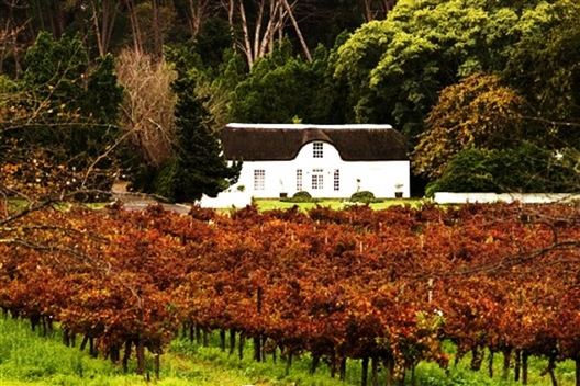 Private Cape Winelands tour