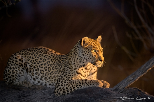 Introduction to Wildlife Photography with Brendon Cremer