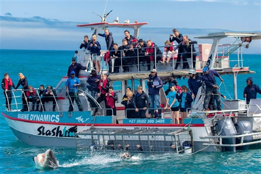 WIN with Ubuntu Adventure Tours & Marine Dynamics